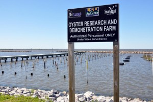 LSU-Sea-Grant-Oyster-Facility